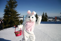 Lake tahoe easter bunny