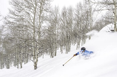 Pistes in Vail powder skiing in the gladed tree runs